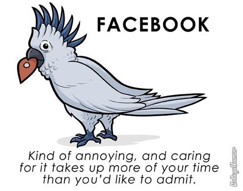 pet-facebook